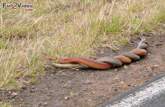 Snake 1111